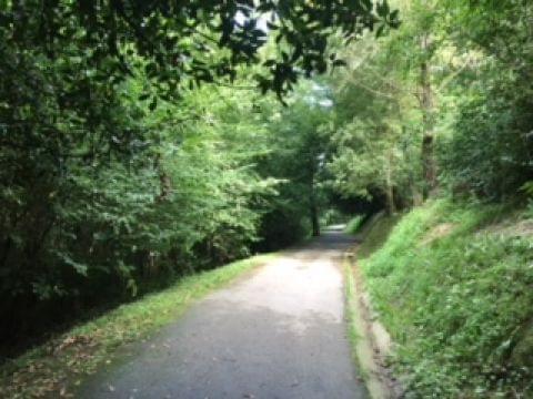 Ruta semi-urbana por el bosque de Miramón