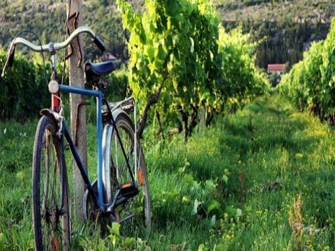Manacor, viñedos y Son Macià
