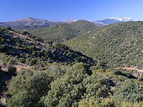 Sierra del Moncayo. Territorio Garnacha