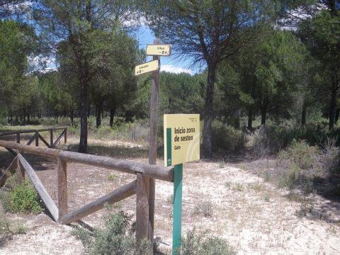 Cabezudos - El Rocío (El camino de Moguer II)