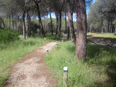 El Rocío - Hinojos (Doñana, de la marisma a los pinares)