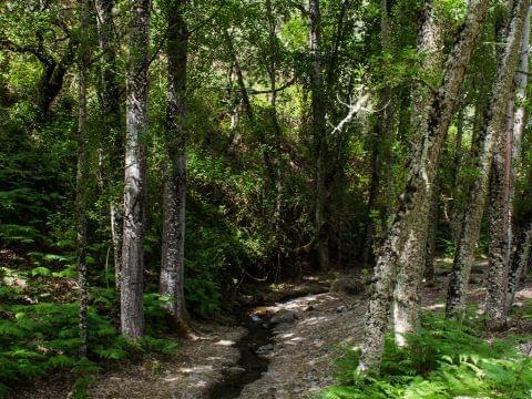 El Repilado - Aroche (Paseando por el bosque manejado)