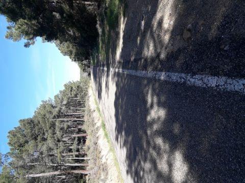 Sierra Algairen(Cariñena-Codos-Pietas-Codos-Aguaron-Encinacorba)