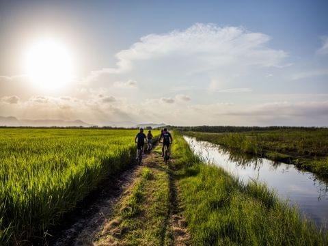 Ruta del arroz: Marjal de Pego