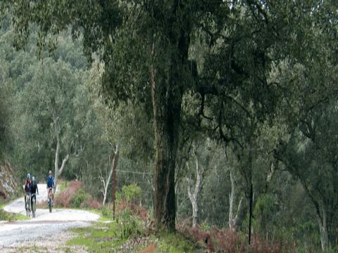 Ruta Guadalmesí