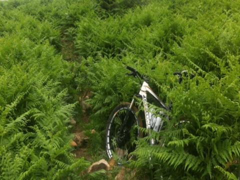 Ruta Corredor Verde