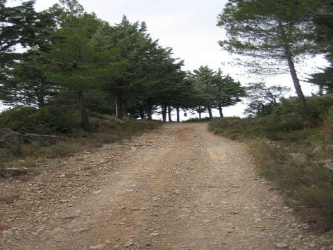 Priorat (Falset - Capçanes - La Fou - Marçà - Falset)