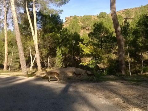 """Centre BTT El Valle. Cofrentes. Ruta 2 """"Camino del Balneario"""""""